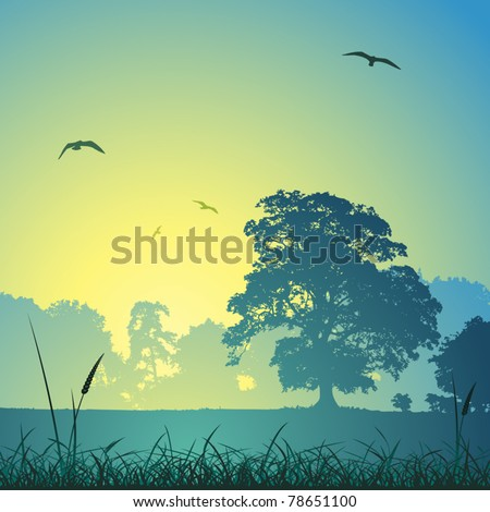 a country meadow landscape with