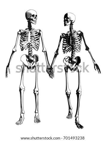 a couple of engraving skeleton