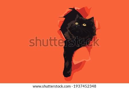 a curious funny black cat