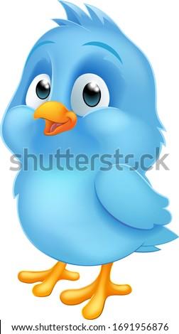 a cute bluebird blue baby bird