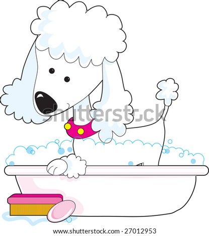 A cute poodle is getting a bath - stock vector