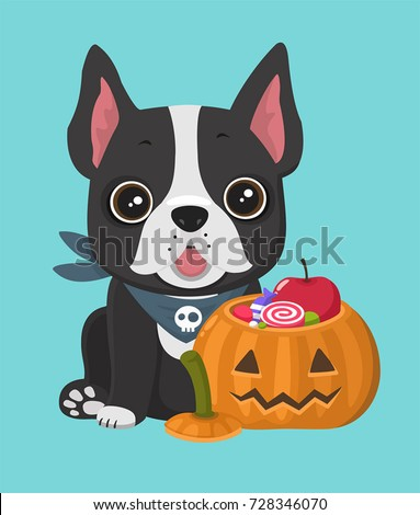 Stock Photo A dog of the breed French Bulldog. Near the puppy Halloween pumpkin with a face filled with sweets and candies.
