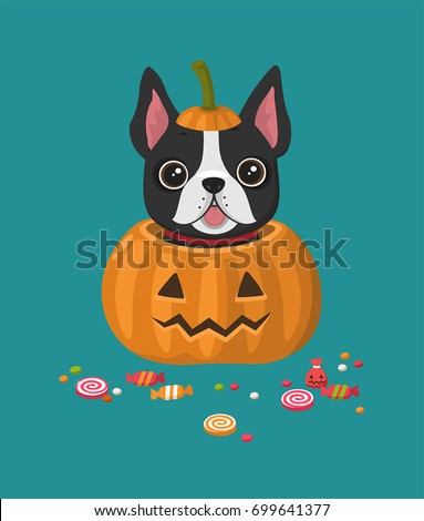 A dog of the breed French Bulldog. The puppy sits in a festive pumpkin. Around the dog are scattered candy and sweets.