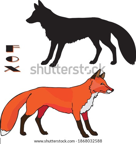 a drawn Fox, two isolated images, linear and silhouette, color and black on a white background, for decoration and stickers.