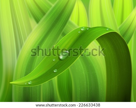 a drop of water on a stalk of