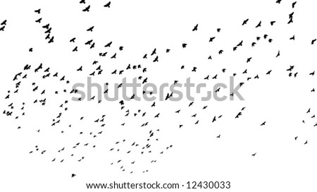 a flock of birds flying off; black and white vector illustration