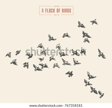 a flock of birds  hand drawn...