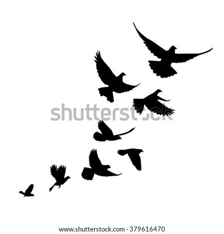 a flock of birds  pigeons  go