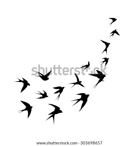 a flock of birds  swallows  go