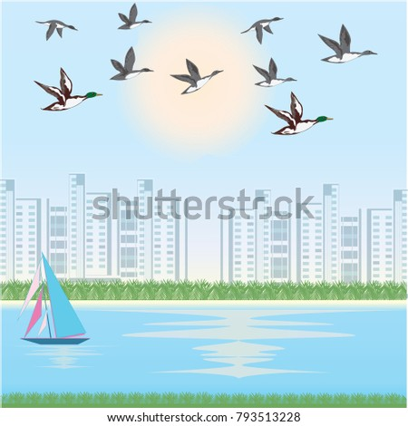 a flock of ducks   cityscape