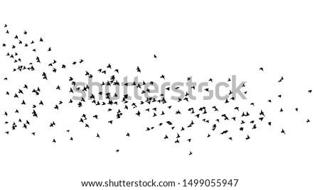 A flock of flying birds. A lot of soaring birds. Vector illustration