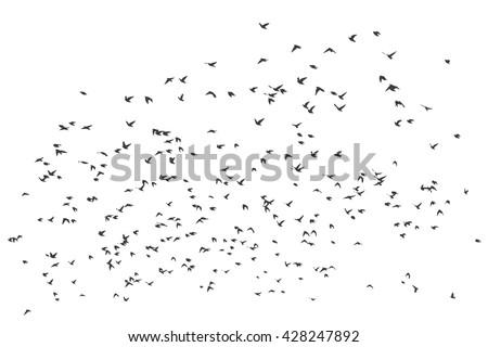a flock of flying birds