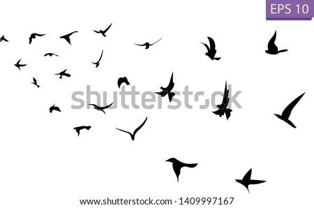 A flock of flying birds. Transparent background