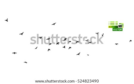 a flock of flying birds vector