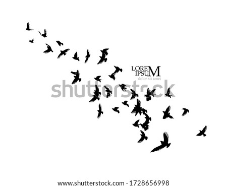 a flock of flying silhouette