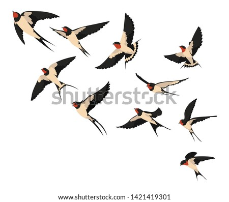 A flock of flying swallows. Vector illustration of cartoon swallows for children. Color drawing flocks of birds. Stock photo ©