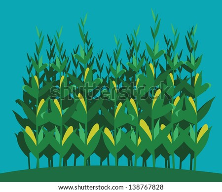 a fully editable horizontal illustration of a cornfield in front of a blue sky for any farm or agricultural concepts - stock vector