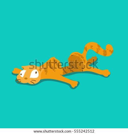 a funny orange cat got run over