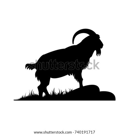 a goat with big horns in