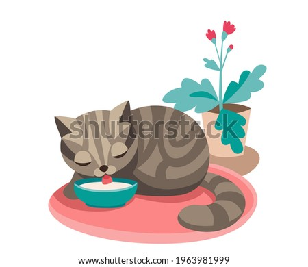 a gray tabby cat sits on a pink rug and drinks milk from a bowl, next to a flower in a pot Stock photo ©