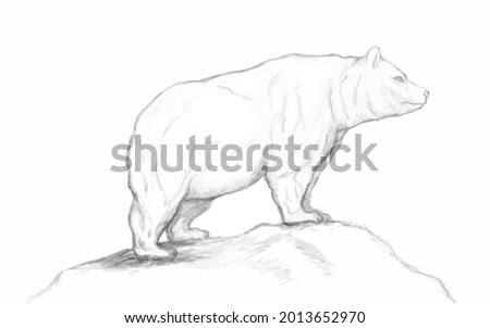 A grizzly bear stands on a hill.Strong grizzly bear.Muscular grizzly bear.Pencil  sketch of a bear.Drawing of a grizzly.Animal sketch. Stock fotó ©