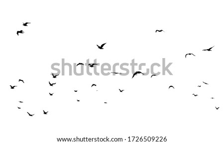 A Hand Drawn Flock of Flying Birds. Monochrome Bird Silhouettes. Design for an invitation, greeting, comicbook, illustration, card, postcard. Illustration isolated on a white background. Vector