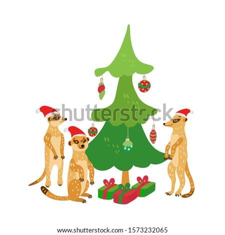 a happy family of meerkats