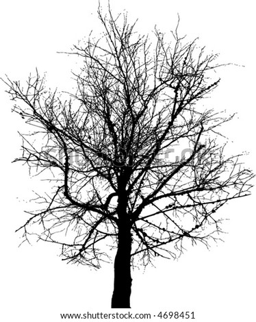 A high contrast bare tree in balck and white