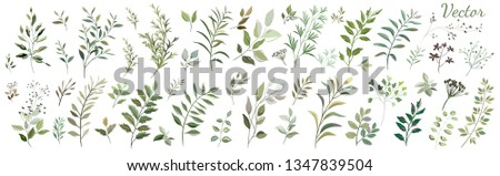 A large Botanical collection. Collection: green leaves, twigs, herbs, seeds. Vector design.