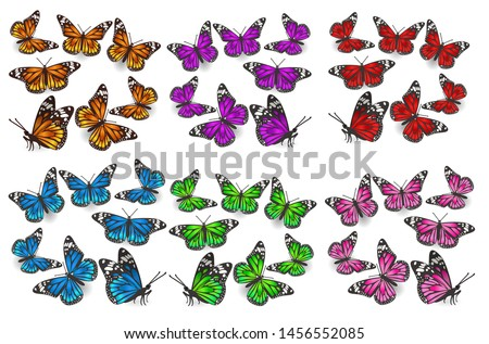 a large set of butterflies in