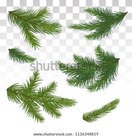A large set of different green pine branches. Isolated. Christmas. Decor. Green lush spruce or pine branch. Fir tree branch isolated on white vector christmas element.  Vector illustration. Eps 10.