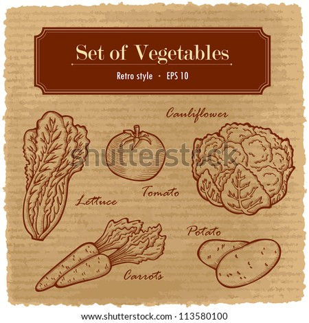 A large set of fresh vegetables. Easily editable vector. Various vegetables on the grange retro background. Isolated vector.  For menu. Hand drawing, retro. Healthy food. Label.