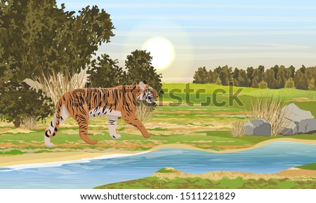 A large striped Asian tiger walks near the river. Large bushes and forest. Summer Realistic Vector Landscape