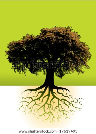tree roots drawing. stock vector : A large tree
