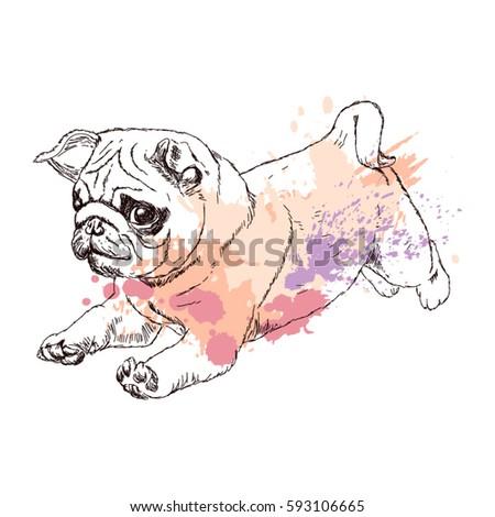 a little puppy runs puppy of