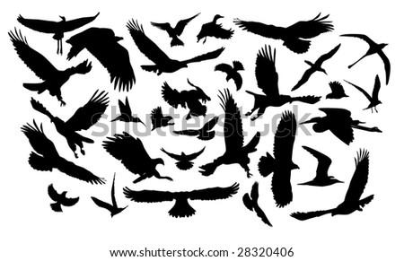 A lot of birds in flight