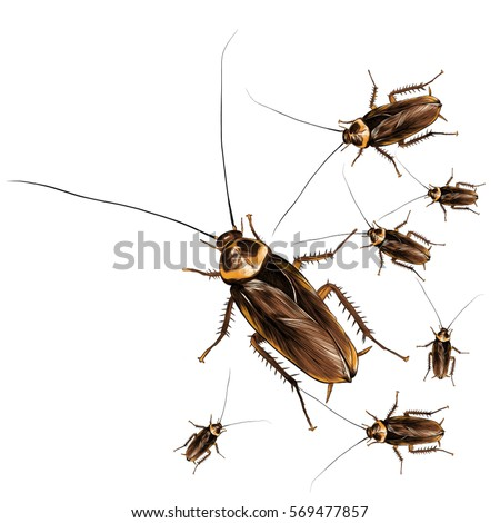 a lot of cockroaches sketch vector color drawing