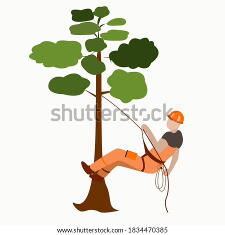 A male arborist climbs a tree on a rope with insurance Stock photo ©