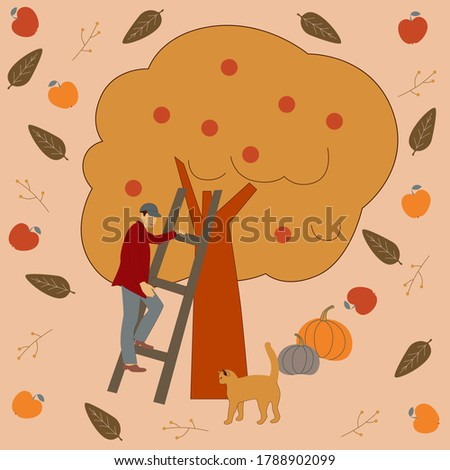 a man collects apples from a