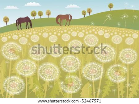 a meadow full of dandelions