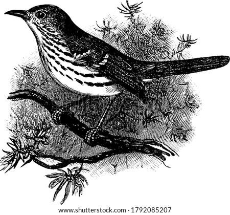 a medium sized bird like