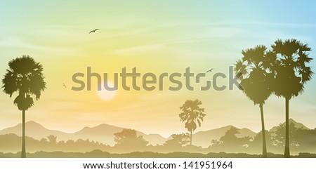 a misty landscape with palm
