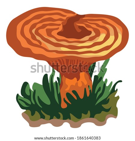 a mushroom or toadstool is the