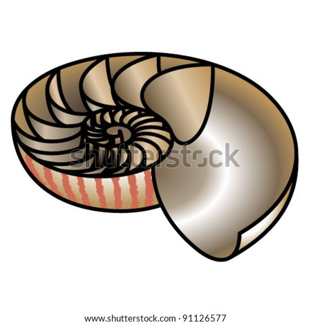 A nautilus shell cut in half to reveal the growth chambers and spiral. - stock vector
