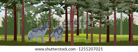 a pack of two wolves in a pine
