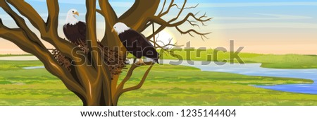 a pair of bald eagle birds in a