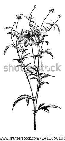 a picture is showing a branch