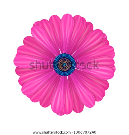 a pink daisy  chamomile or