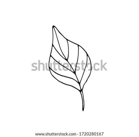a plant leaf is a separate