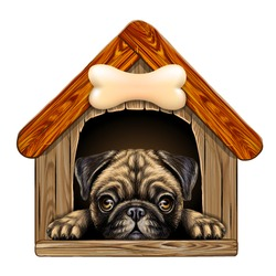 A pug looks out of the doghouse. Wall sticker. Artistic, color image of a pug dog looking out of a wooden dog house on a white background.